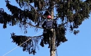 Обрезка  и удаление аварийных деревьев  в Черкассах